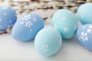 Фотография Праздники Пасха Яйца Голубой