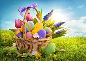 Картинки Праздники Пасха Люпин Тюльпаны Яйца Корзина Трава Бантик