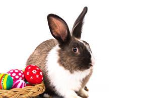 Фотография Праздники Пасха Кролики Белый фон Яйца Животные