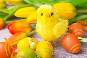 Картинки Праздники Пасха Тюльпаны Цыплята Яйца