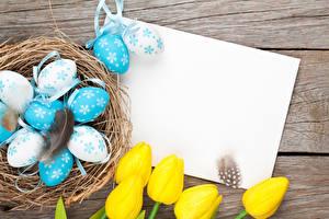 Фото Праздники Пасха Тюльпаны Перья Яйца Шаблон поздравительной открытки Гнездо