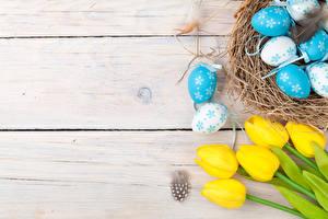 Фотографии Праздники Пасха Тюльпаны Перья Доски Яйца Гнездо Цветы