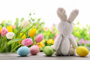 Фото Праздники Пасха Тюльпаны Кролики Яйца