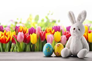 Фотография Праздники Пасха Тюльпаны Кролики Яйца Сидит Цветы