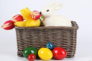 Фотографии Праздники Пасха Тюльпаны Кролики Белый фон Яйца Корзинка