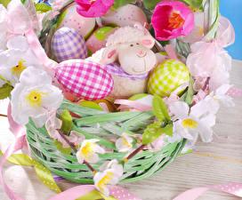 Фотография Праздники Пасха Тюльпаны Овцы Яйца Корзина