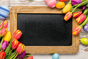Обои Праздники Пасха Тюльпаны Шаблон поздравительной открытки Яйца Цветы