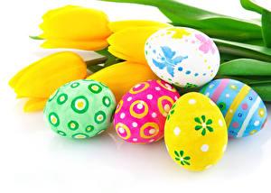 Картинка Праздники Пасха Тюльпаны Белый фон Яйца