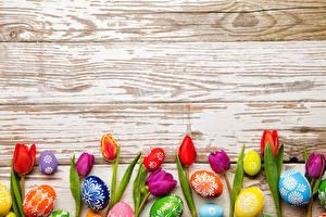 Обои Праздники Пасха Тюльпаны Доски Яйца Цветы