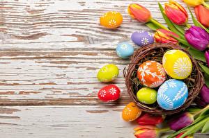Обои Праздники Пасха Тюльпаны Доски Яйца Гнездо