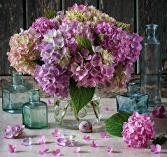 Обои Гортензия Лепестки Бутылка Цветы