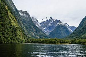 Фото Новая Зеландия Гора Лес Заливы Harrison Cove Milford Природа
