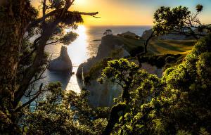 Фотографии Новая Зеландия Рассветы и закаты Побережье Скала Hahei Природа