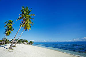 Фото Филиппины Тропики Побережье Пальмы Песок Пляж Природа
