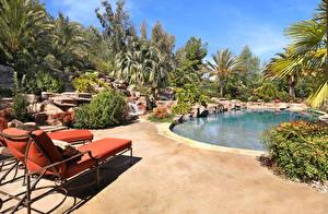 Фотографии Курорты Плавательный бассейн Пальмы Шезлонг Кусты Природа