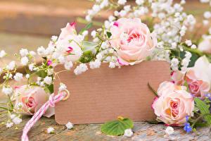 Фотографии Розы Шаблон поздравительной открытки Цветы