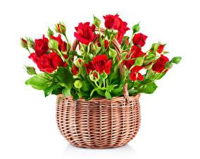 Картинка Розы Корзинка Красный Бутон Белый фон Цветы