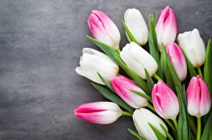 Фото Тюльпаны Вблизи Цветной фон Цветы