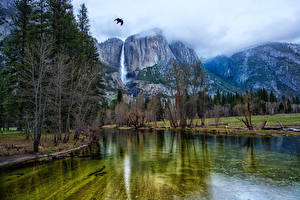 Обои Америка Парк Гора Озеро Птицы Пейзаж Йосемити Деревья