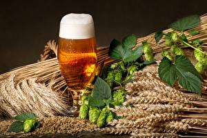 Картинка Пиво Хмель Пшеница Бокал Колосья Пена Листва