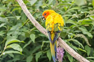 Фотографии Птицы Попугаи Ветвь