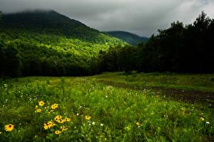 Фото Канада Горы Леса Трава Quebec