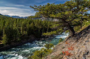 Обои Канада Парки Реки Банф Дерево