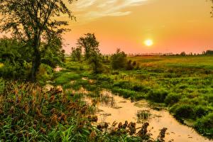 Фото Канада Рассветы и закаты Квебек Болото Трава Солнце
