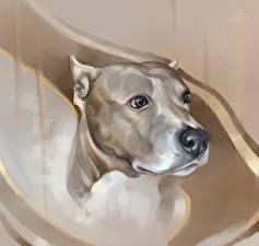 Обои Собаки Рисованные Голова Смотрит Амстафф