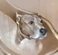 Обои Собака Рисованные Голова Смотрят Амстафф