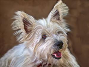 Картинки Собаки Рисованные Мальтезе Животные