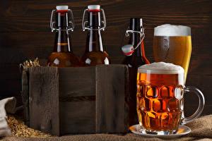 Фотографии Напитки Пиво Кружка Пена Бутылка Продукты питания