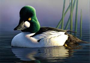 Фото Утки Рисованные Птицы James Hautman