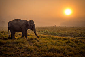 Фотографии Слоны Солнце Трава Туман Savanna
