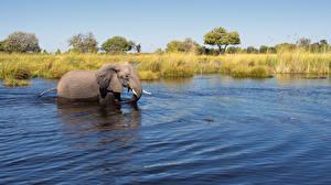 Фотографии Слоны Вода