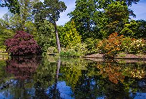 Обои Англия Парки Пруд Деревья Кусты Exbury Gardens Природа