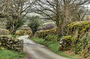 Фото Англия Дороги Камни Деревья Мох Widecombe in the Moor