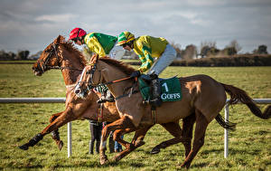 Фото Конный спорт Лошадь Мужчины Униформе Две Бег