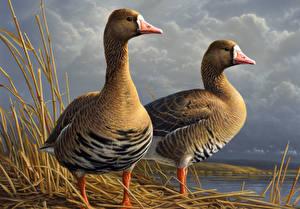 Фото Гуси Рисованные Птицы Двое James Hautman Животные