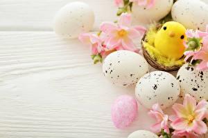 Картинка Праздники Пасха Цыплята Доски Яйцами Гнездо