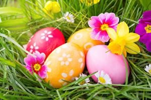 Картинка Праздники Пасха Нарциссы Первоцвет Яйца Трава