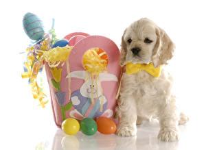 Фотографии Праздники Пасха Собаки Белый фон Яйца Спаниель Бантик Животные