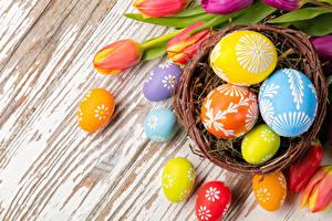 Обои Праздники Пасха Яйца Гнездо