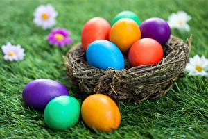 Фотография Праздники Пасха Яйца Гнездо Трава