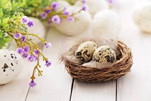 Фотографии Праздники Пасха Перья Доски Яйца Гнездо