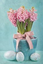 Фотография Праздники Пасха Гиацинты Цветной фон Яйца Розовый Бантик Цветы