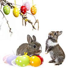 Картинка Праздники Пасха Кролики Белым фоном Яйцами 2 Животные