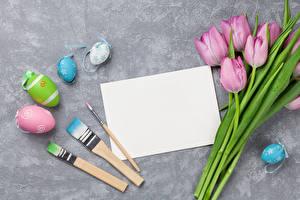 Фото Праздники Пасха Тюльпаны Яйца Розовый Шаблон поздравительной открытки Кисть Цветы