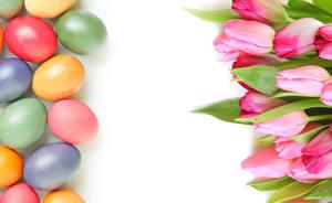 Фото Праздники Пасха Тюльпаны Яйца Шаблон поздравительной открытки Цветы