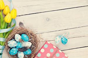 Фото Праздники Пасха Тюльпаны Перья Яйца Доски Гнездо